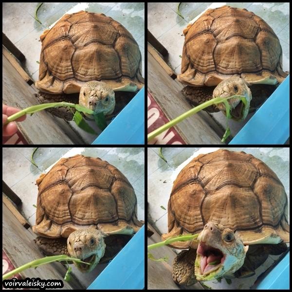 tortoise done1