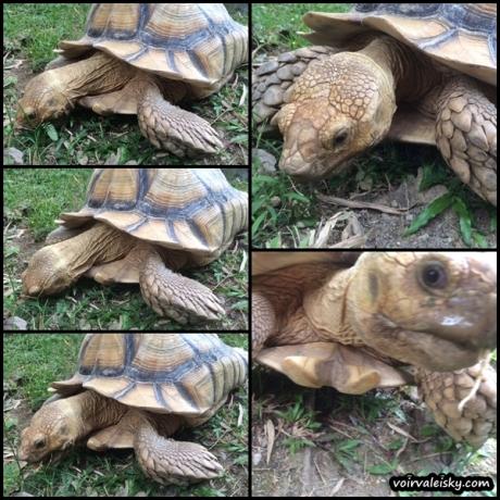 tortoise done2