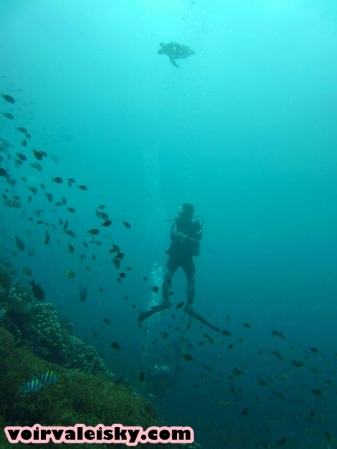 diving 48