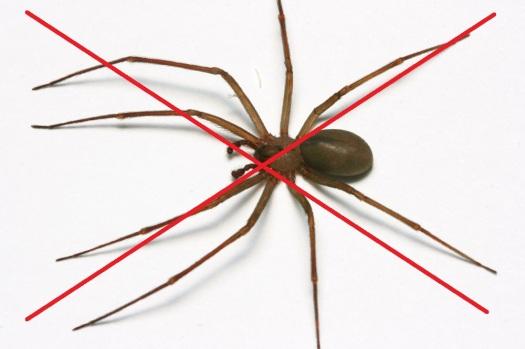 NO spider.jpg